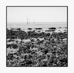 Huites sauvages, plage de la Bernerie-en-Retz, France.